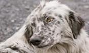 Folder do Evento: Adoção de Cãezinhos