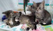 Folder do Evento: Mutirão de Castração - Somente para Gato