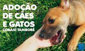 Folder do Evento: Adoção de Cães e Gatos