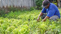 Projeto Agricultura Urbana de Osasco oferece produtos diferenciados e preços convidativos